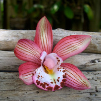 Flower Floral Hair Clip-SMALL CORAL ORCHID-Beach Weddings, Destination Weddings, Tropical Rainforest, Hula Girls, Hawaii, Orchid Flowers