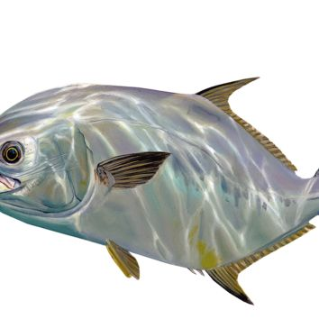 Permit Fishing Decal by Randy McGovern