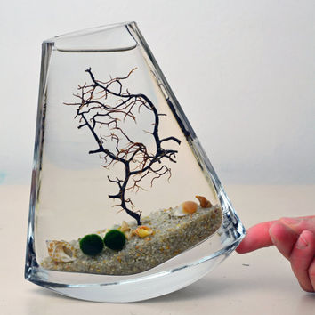 Marimo Terrarium // Japanese Moss Ball Aquarium // Sea Fan // Shells // Sand // Green Gift // Home Decor