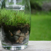 Moss Terrarium, Moss, Spring, Emerald, Candle Holder, Green, Garden