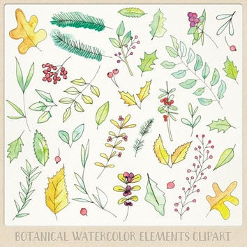 Watercolor clipart floral and botanical elements (39pc). hand painted water colour flowers clip art and plants in a fall theme color setting