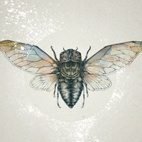"""Cicada"" - Art Print by Teagan White"
