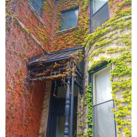 Color Photography - Tree House - fine art print, home decor, wall photo, chicago, vines, architecture