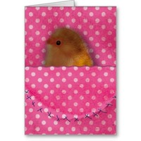Cute bird in the pink pocket design