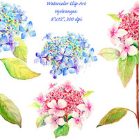 hand painted watercolour blue and pink hydrangea digital clipart printable instant download scrapbook watercolor