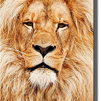 Head of African Lion Picture on Stretched Canvas, Wall Art Decor Ready to Hang!.