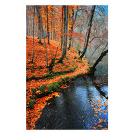 Autumn, Fall, leaves, Nature photography, Wall Decor, lake, Orange, rustic, leaf, woodland in Fall, reflection,  gift ideas 10x15 inches