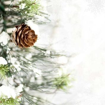 SNOW COVERED TREE BACKDROP 8x8 - LCPC4012 - LAST CALL