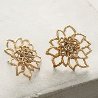 Poinsettia Posts by Anthropologie in Gold Size: One Size Earrings