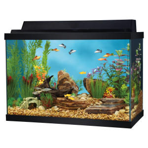 Top fin 20 gallon aquarium starter kit from pet smart for 20 gallon fish tank size