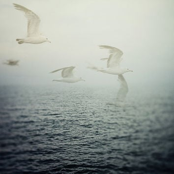 Ocean Art, Birds, Seagulls, Nature Photography, Nautical Art Print, Summer, Misty Navy Blue Sea  - Dreaming is Free