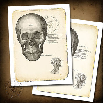 Antique Anatomy Plate - 8.5x11 inch Digital Sheets CP-139 - Print It Yourself - Downloadable Wall Decor - Instant Download