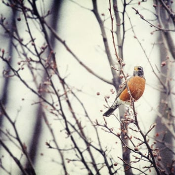 Bird Photograph Spring Robin Woodland by LisaRussoPhotography