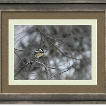 Chickadee, Bird Photography Bird in the snow,snowing,winterGifts under 25,nature photography,black capped chickadee,cute little bird print