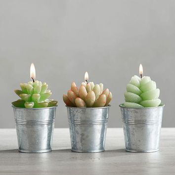 Set of 3 Succulent Cactus Candles in Gift Box
