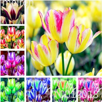 100 Pcs Bonsai Mixed Tulip Plants, flowers seedling outdoor, Semenata of flowers perennial, Planting Simple for Home & Garden