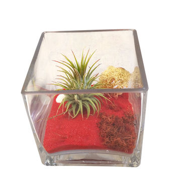 Red Christmas Airplant Square