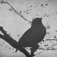 Bird on a Branch Black and White Photography Art, Abstract Unique Artwork, Coffeeshop Art, Nature decor, For Her, Gift Idea, Gray Decor