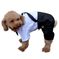 Dog Pants Outfit