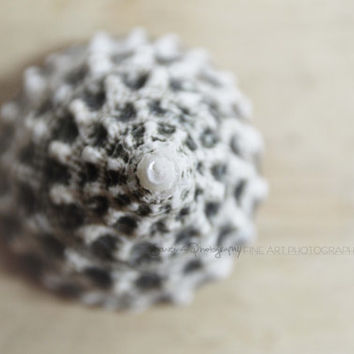 nature photography, shell, macro still life, pale pastel, sea themed, black, white, bokeh, faded, wall art