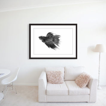 CARBON - Betta Fish -  Black and White - Fine Art Photography - Siamese Fighting Fish - Fish Photo - Macro - Fins - Fish Print - Wall Art