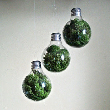 THREE Light Bulb Decorative Moss Terrariums by eGardenStudio