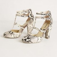 Snake Charmer Pumps by Seychelles