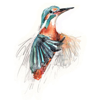 Kingfisher Animal watercolor art giclee A4 print, colorful bird, nursery decor, cottage chic.
