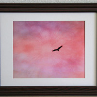 Bird in Pink Sky 8x10 Photograph, Fine Art Photography, Home Decor, Wall Hanging