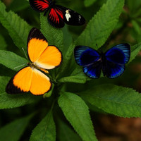 Real Butterfly Photography Print