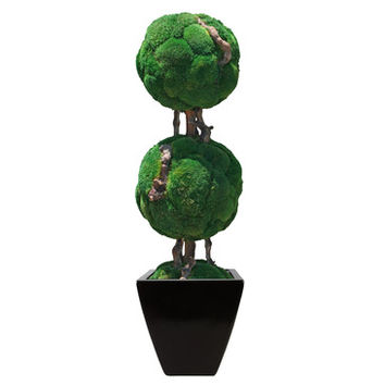 Forever Green Art Double Moss Ball Bonsai