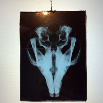 X-Ray Window Hangers