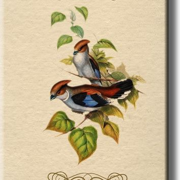 Two Birds on a Branch Vintage Picture on Stretched Canvas, Wall Art Décor, Ready to Hang