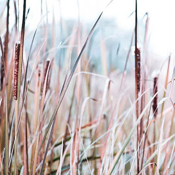 Nature photography, baby blue, brown, beige, rustic, woodland, wall decor, bullrushes, cattails