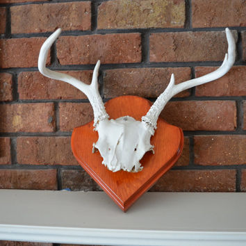 Vintage Deer Antlers Mounted on Plaque Whitewashed 6 point Wall hanging taxidermy