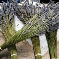 """Lavender Dried Premium Bundles - 160 - 180 Stems - 18"""" - 22"""" Long - (Pack of 1 Bundle) - Made in the USA"""