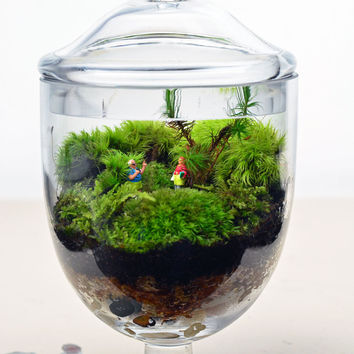 Terrarium // Live Moss // Little People // Glass Apothecary Jar // Indoor Garden // Home Decor // Gift Ideas