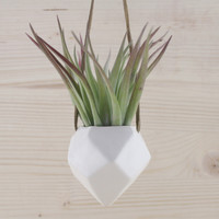 Janelle Gramling Designs Hanging Faceted Air Plant Holder
