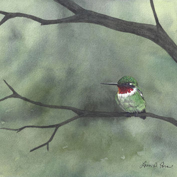 Hummingbird Watercolor Painting- 5x7 Archival Print- Bird Art Signed Giclee by Laura D. Poss