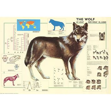 The Wolf Animal Education Poster 27x39