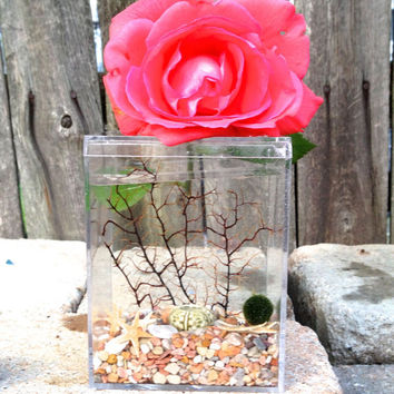 Zen Love//japanese marimo terrarium//living terrarium//home decor// wedding gift//home decor
