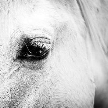 Black and white horse photography 11x14 16x24 20x30 large photography print fine art photograph equine photography nature