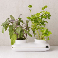 Herb Planter | Urban Outfitters