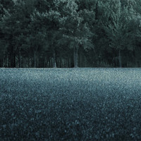 Woodland photography, Landscape Photograph, Night Photography, Dark Blue / Night Forest