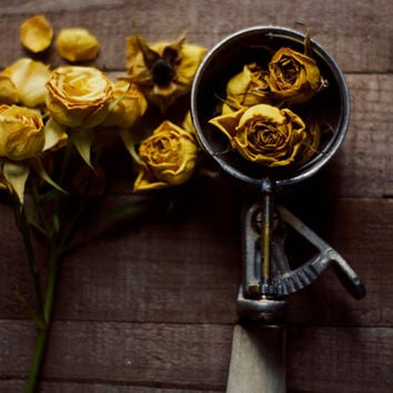 Still life, flower photography, rustic home decor, roses, yellow, brown, whimsical art, spring, kitchen art, nursery art, fine art photo