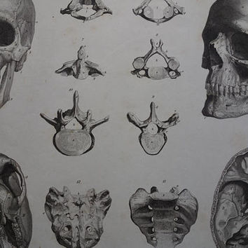 "SKULL old prints 1870 original antique anatomy print of skulls human head cranium tailbone vintage illustration 10x13"" small poster"