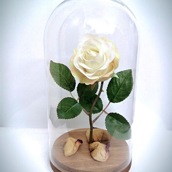 Enchanted rose/Beauty and the beast rose/disney/fairytale/romantic/white roses/glass and rose/rose in a bottle/glass dome/wedding/engagement