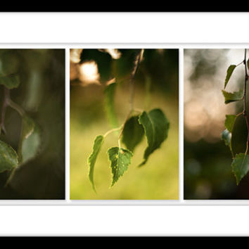 "Wall Art, set x 3 Fine Art Print 5""x7"", wall decor, home decor, birch leaves, green yellow woodland wall art"