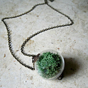Glass Orb Moss ball Terrarium Pendant