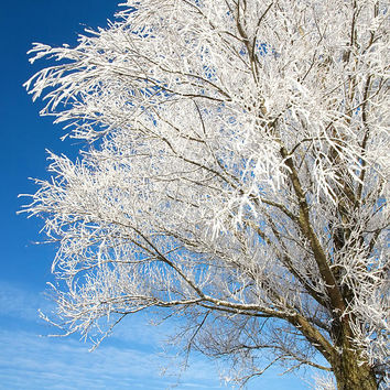Tree Covered With Snow And Frost. by Jan Brons
